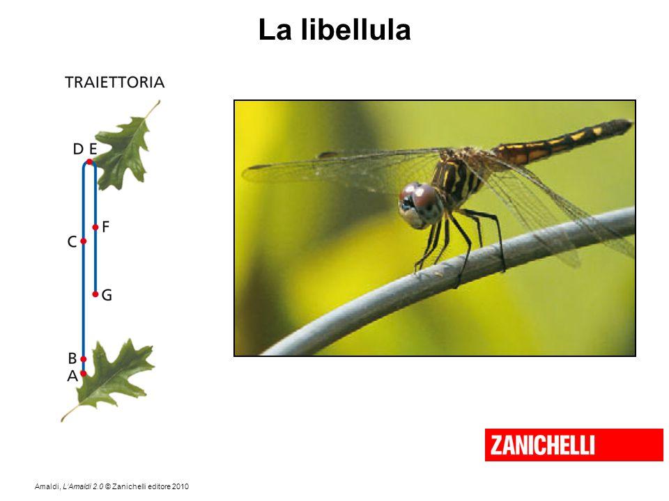 Amaldi, L'Amaldi 2.0 © Zanichelli editore 2010 La libellula