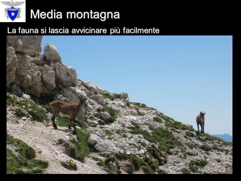 Media montagna La fauna si lascia avvicinare più facilmente