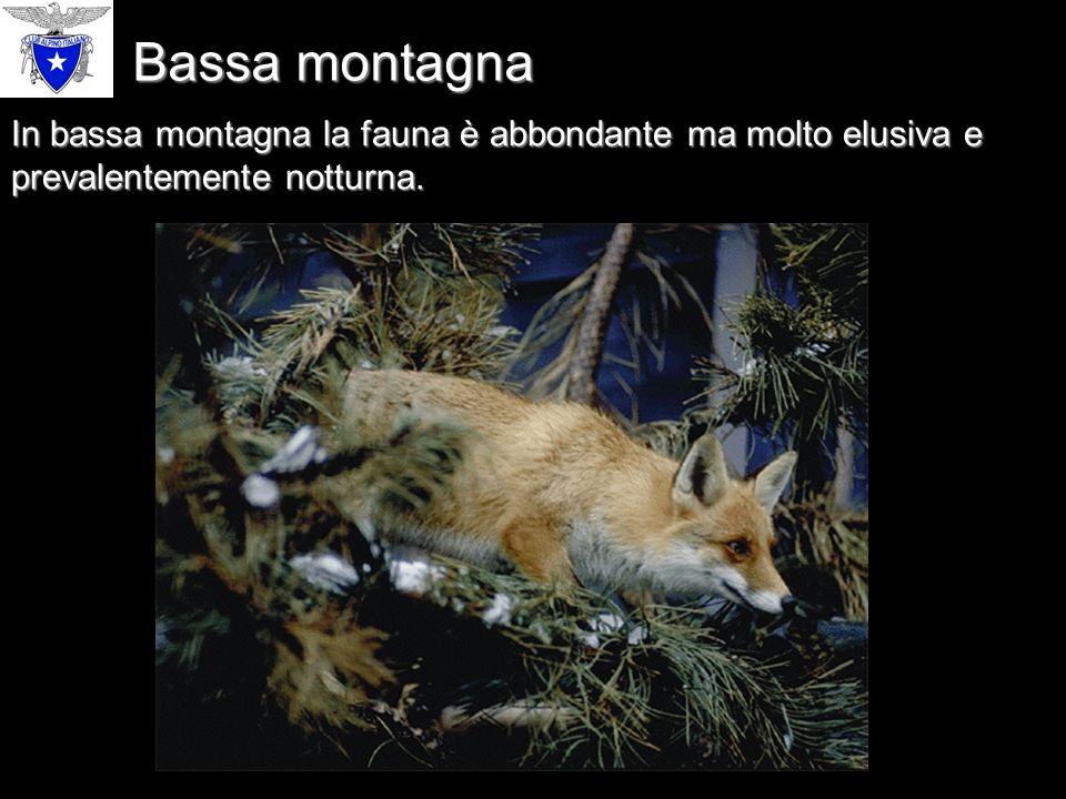 In bassa montagna la fauna è abbondante ma molto elusiva e prevalentemente notturna. Bassa montagna