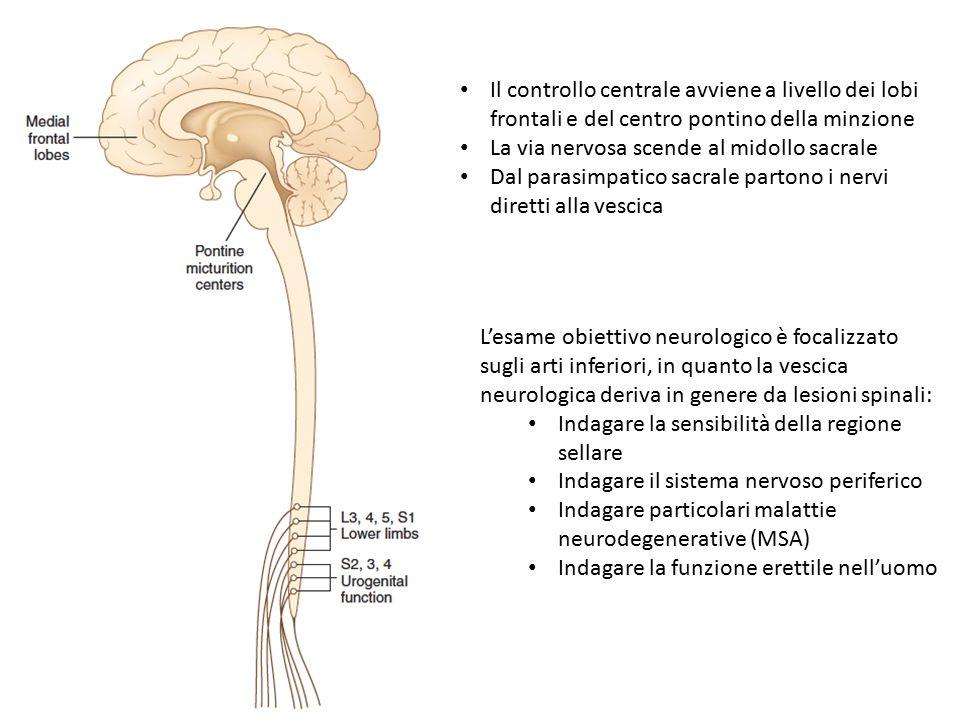 Il controllo centrale avviene a livello dei lobi frontali e del centro pontino della minzione La via nervosa scende al midollo sacrale Dal parasimpatico sacrale partono i nervi diretti alla vescica L'esame obiettivo neurologico è focalizzato sugli arti inferiori, in quanto la vescica neurologica deriva in genere da lesioni spinali: Indagare la sensibilità della regione sellare Indagare il sistema nervoso periferico Indagare particolari malattie neurodegenerative (MSA) Indagare la funzione erettile nell'uomo