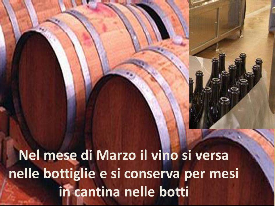 Nel mese di Marzo il vino si versa nelle bottiglie e si conserva per mesi in cantina nelle botti
