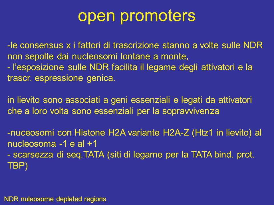 open promoters -le consensus x i fattori di trascrizione stanno a volte sulle NDR non sepolte dai nucleosomi lontane a monte, - l'esposizione sulle NDR facilita il legame degli attivatori e la trascr.