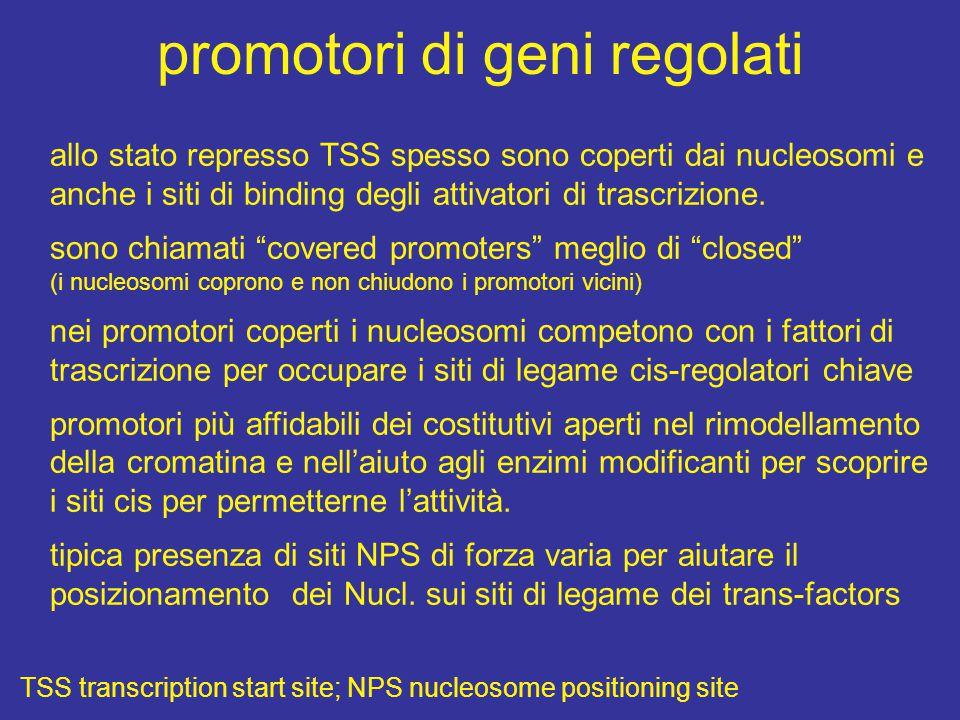 promotori di geni regolati allo stato represso TSS spesso sono coperti dai nucleosomi e anche i siti di binding degli attivatori di trascrizione.