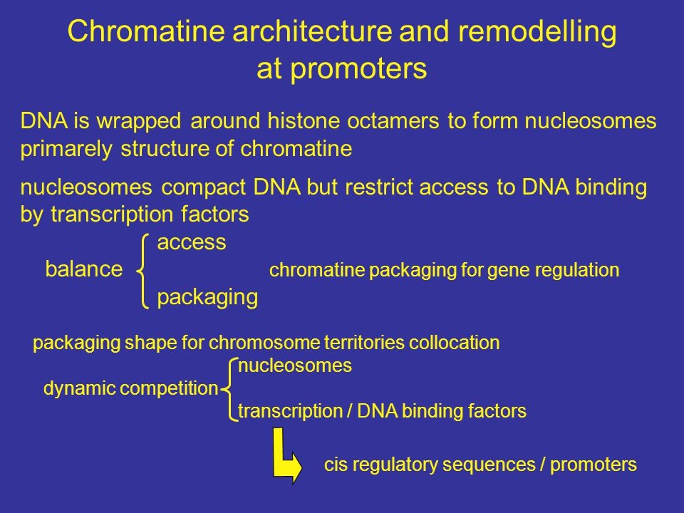 Chromatine architecture and remodelling at promoters DNA is wrapped around histone octamers to form nucleosomes primarely structure of chromatine nucl