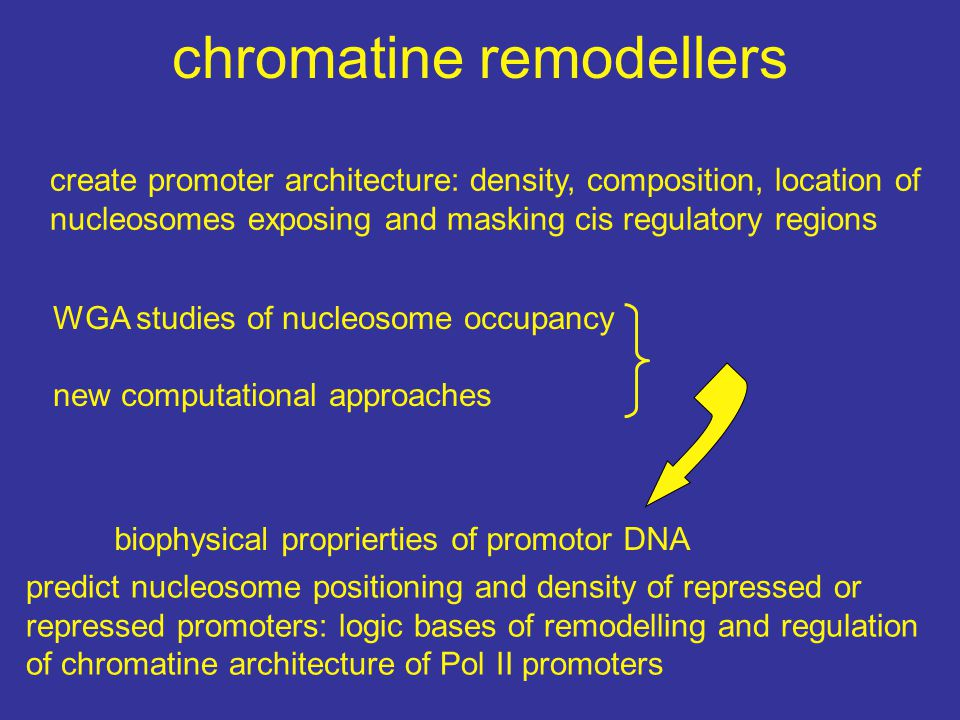 chromatine remodellers create promoter architecture: density, composition, location of nucleosomes exposing and masking cis regulatory regions WGA stu