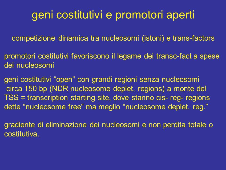 geni costitutivi e promotori aperti competizione dinamica tra nucleosomi (istoni) e trans-factors promotori costitutivi favoriscono il legame dei transc-fact a spese dei nucleosomi geni costitutivi open con grandi regioni senza nucleosomi circa 150 bp (NDR nucleosome deplet.