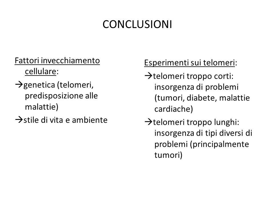CONCLUSIONI Fattori invecchiamento cellulare:  genetica (telomeri, predisposizione alle malattie)  stile di vita e ambiente Esperimenti sui telomeri