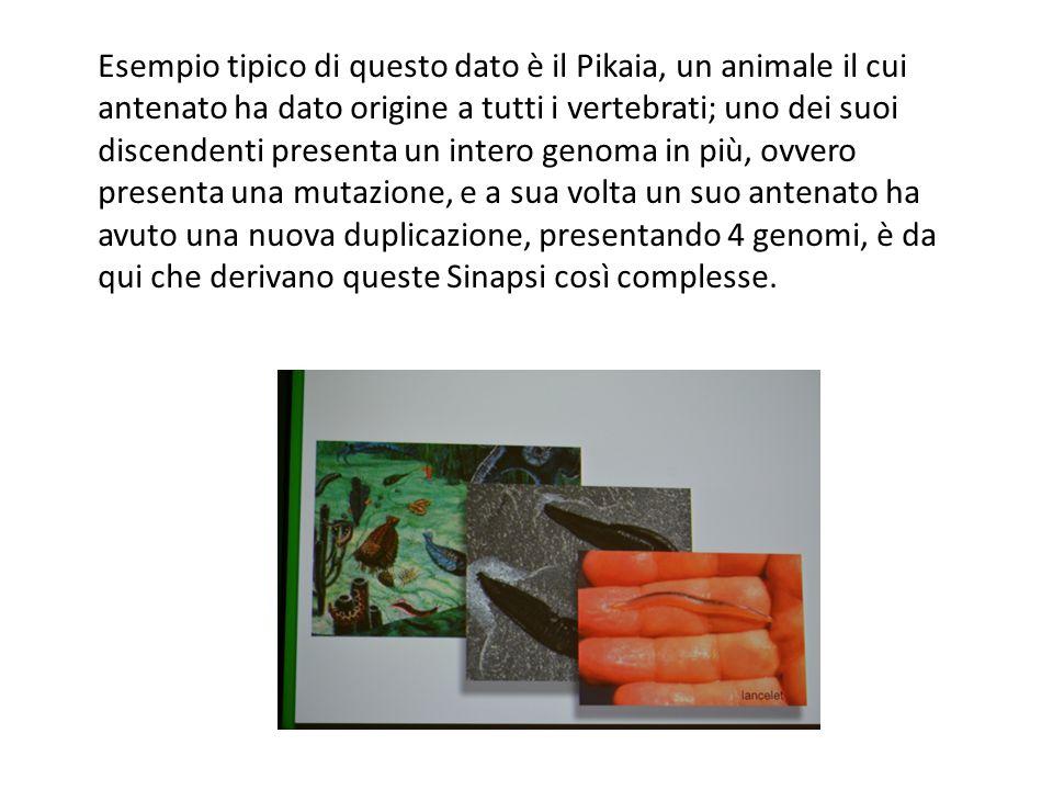 Esempio tipico di questo dato è il Pikaia, un animale il cui antenato ha dato origine a tutti i vertebrati; uno dei suoi discendenti presenta un inter