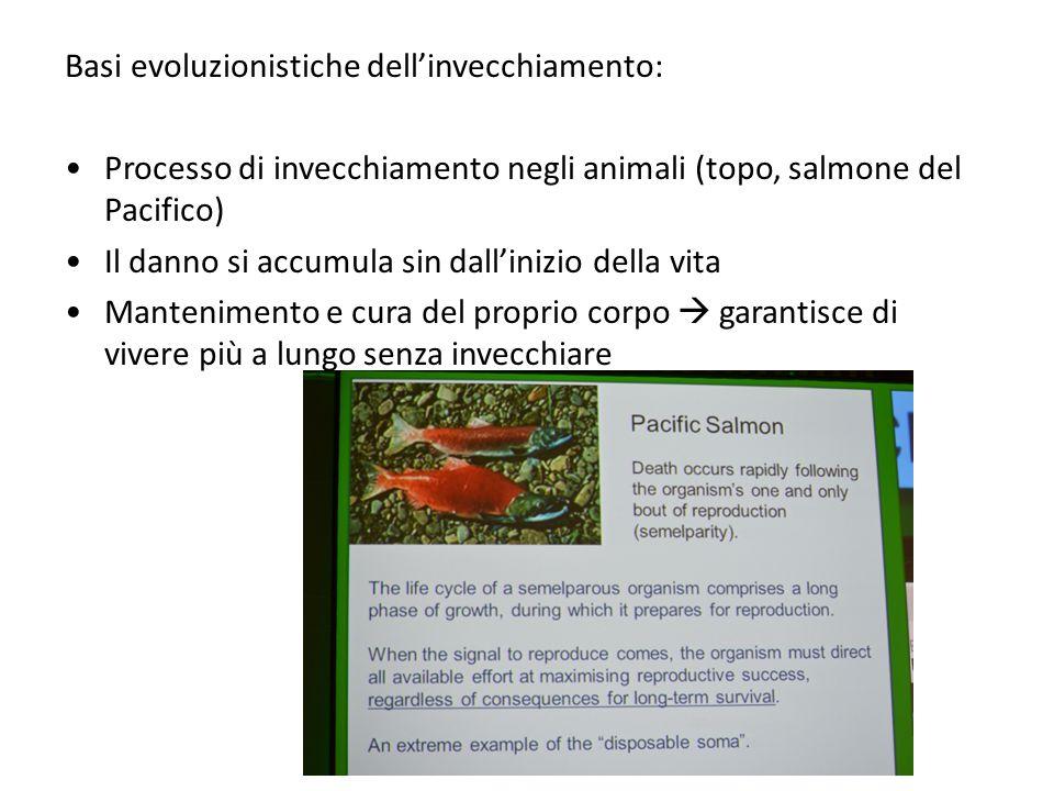 Basi evoluzionistiche dell'invecchiamento: Processo di invecchiamento negli animali (topo, salmone del Pacifico) Il danno si accumula sin dall'inizio