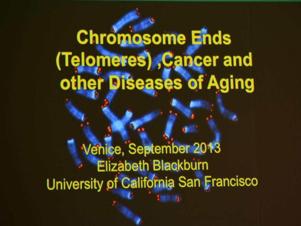 Cromosomi e telomeri, nuova frontiera per lo studio su malattie e longevità TELOMERI: estremità dei cromosomi, formate dalla sostanza telomerasi  induzione genetica in laboratorio: cellule mortali  induzione spontanea: cellule virtualmente immortali INVECCHIAMENTO DEL CORPO UMANO  L invecchiamento è legato alla riparazione cellulare, determinata dal telomerasi.