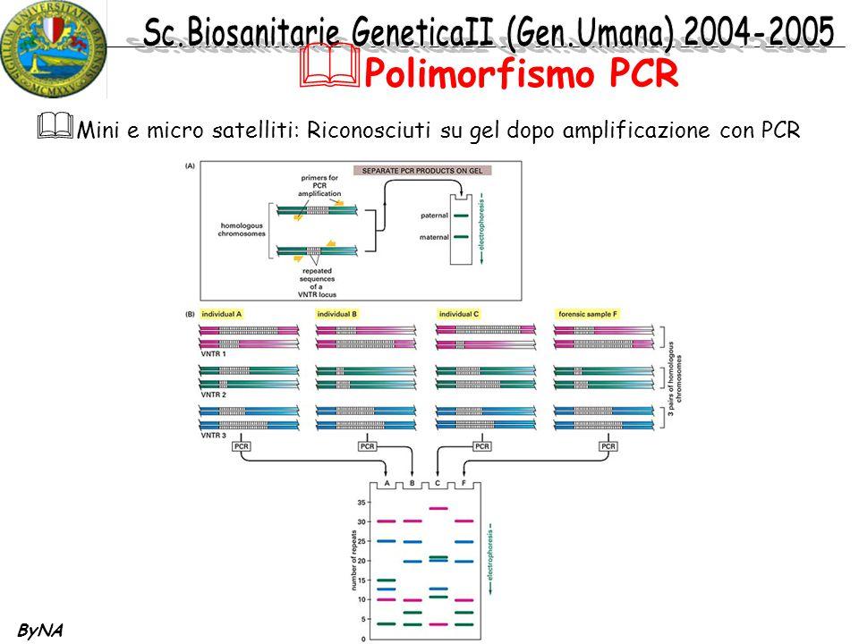 ByNA  Mini e micro satelliti: Riconosciuti su gel dopo amplificazione con PCR  Polimorfismo PCR
