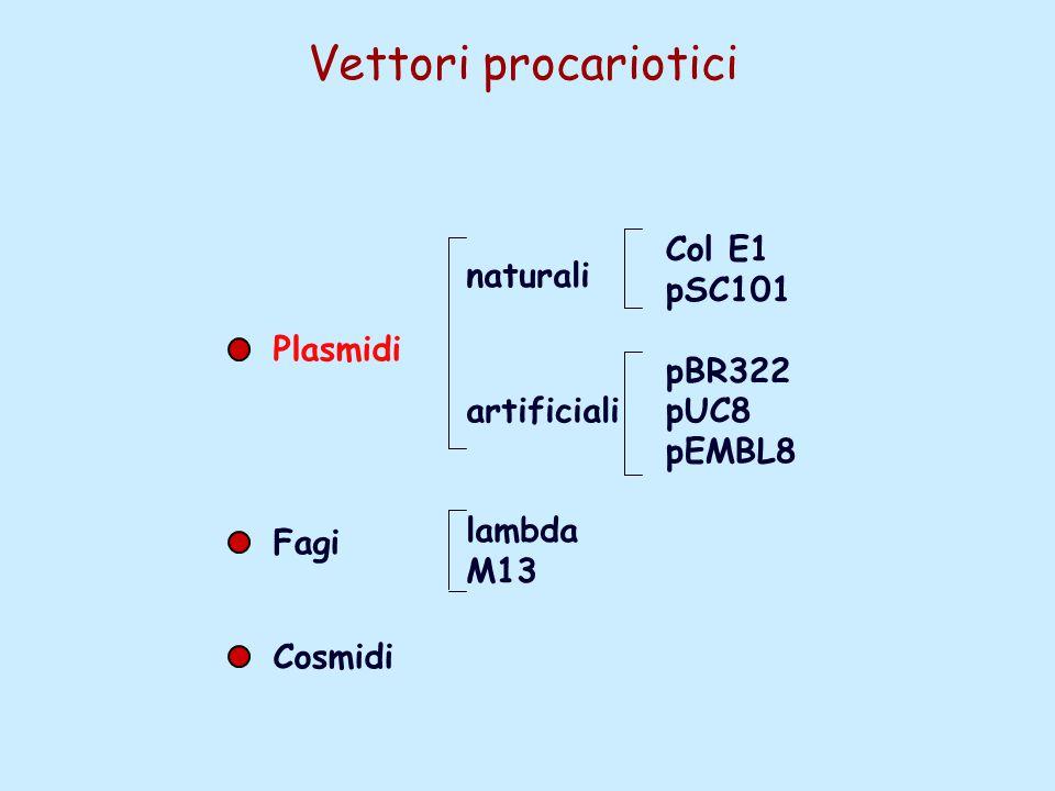 Vettori procariotici Plasmidi Fagi Cosmidi naturali artificiali Col E1 pSC101 pBR322 pUC8 pEMBL8 lambda M13