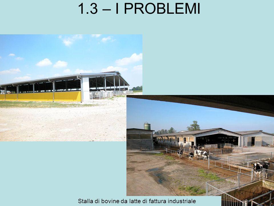 1.3 – I PROBLEMI Stalla di bovine da latte di fattura industriale