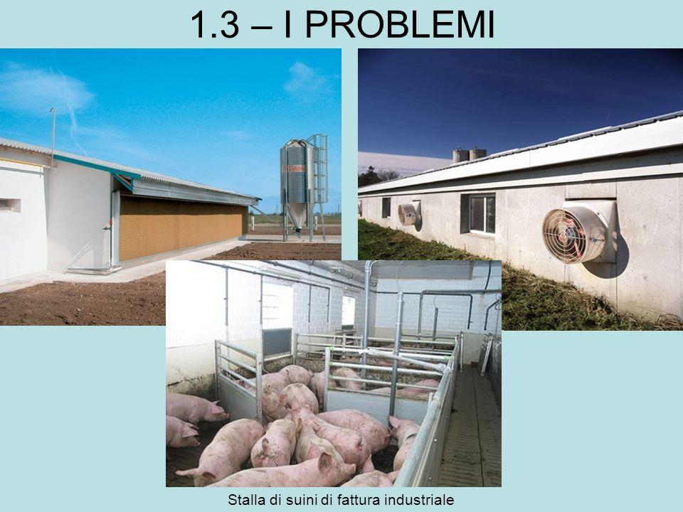 1.3 – I PROBLEMI Stalla di suini di fattura industriale