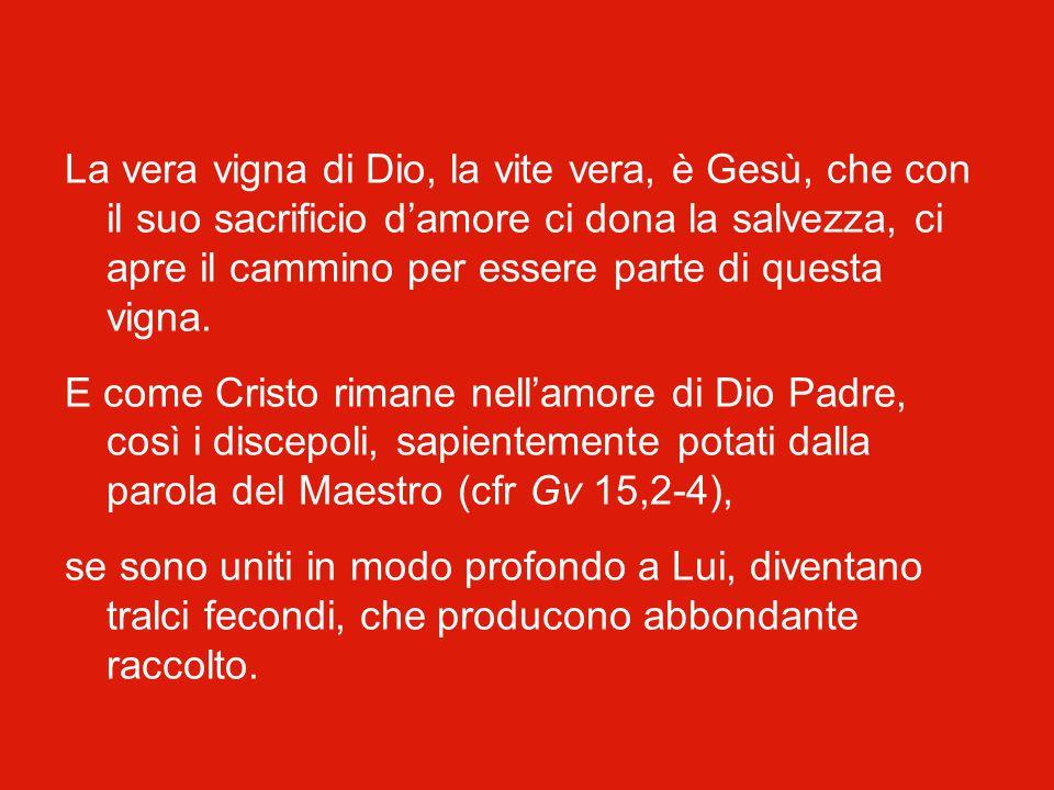 Il Vangelo di oggi, quinta domenica del Tempo Pasquale, si apre con l'immagine della vigna. «Gesù disse ai suoi discepoli: