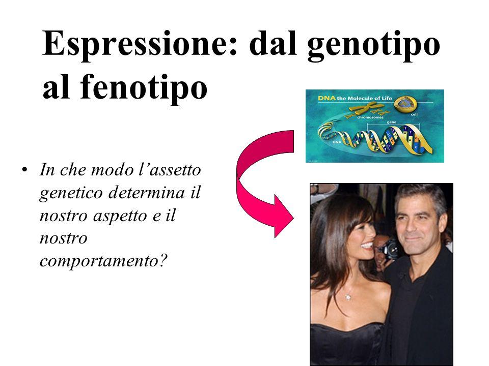 Espressione: dal genotipo al fenotipo In che modo l'assetto genetico determina il nostro aspetto e il nostro comportamento?