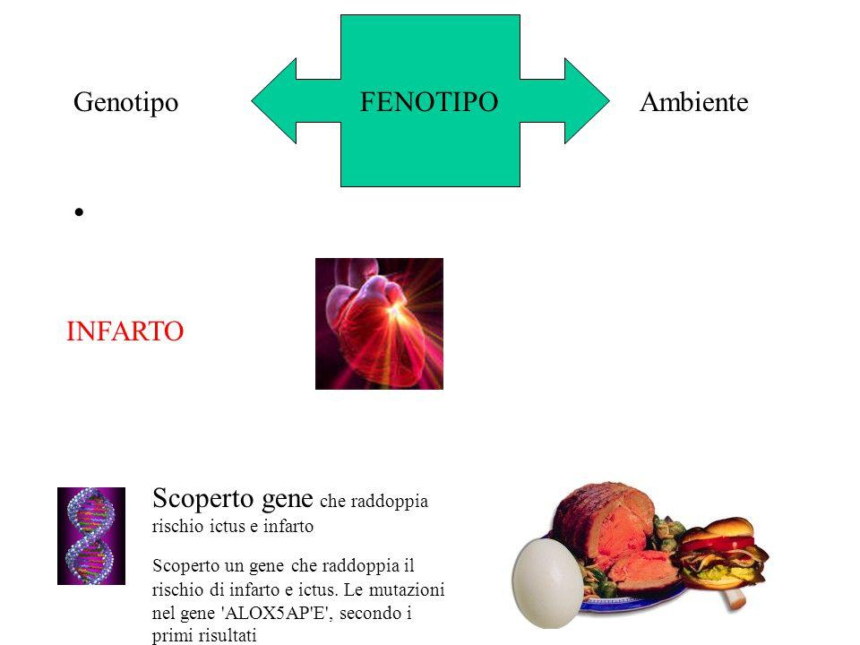 FENOTIPOGenotipoAmbiente Scoperto gene che raddoppia rischio ictus e infarto Scoperto un gene che raddoppia il rischio di infarto e ictus. Le mutazion