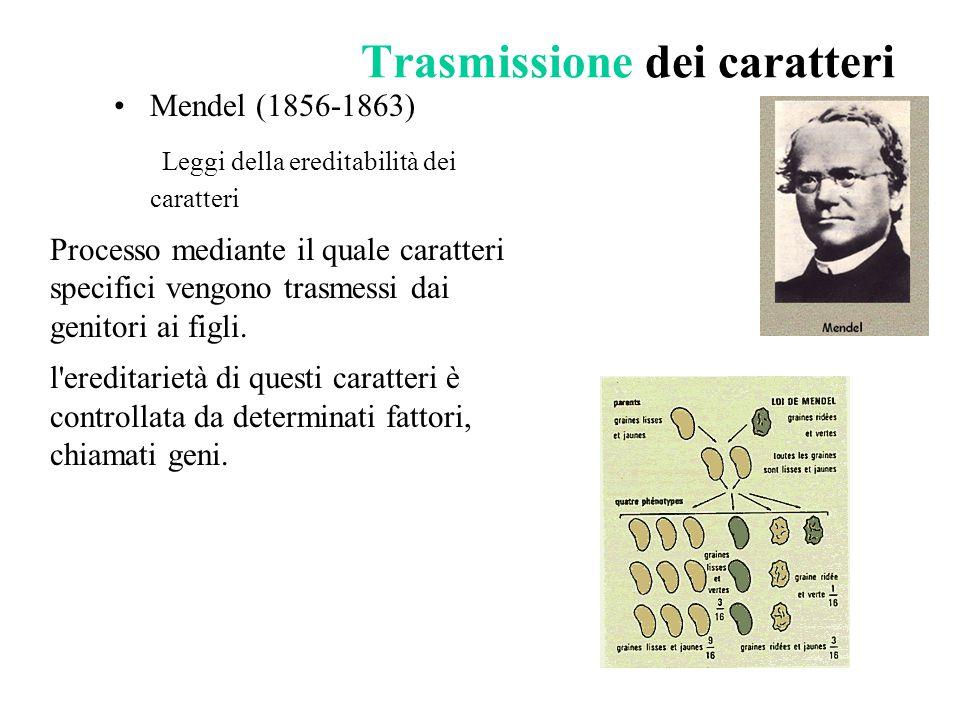 Trasmissione dei caratteri Mendel (1856-1863) Leggi della ereditabilità dei caratteri Processo mediante il quale caratteri specifici vengono trasmessi