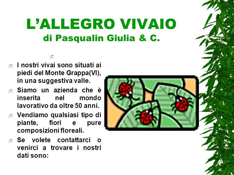L'Allegro Vivaio di Pasqualin Giulia & C Via XIV maggio n°49, Borso del Grappa (VI) Tel: 0418-8765456 Cell: 333-5216392 E-mail: giuliapasqualin@alice.it giuliapasqualin@alice.it