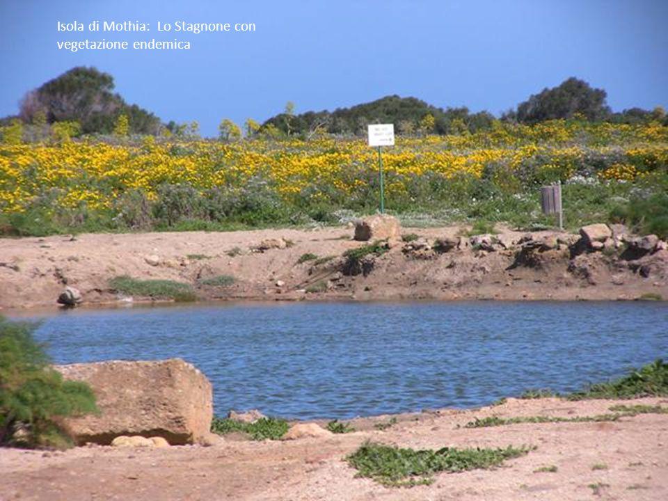 Isola di Mothia: ingresso casa Fenicia