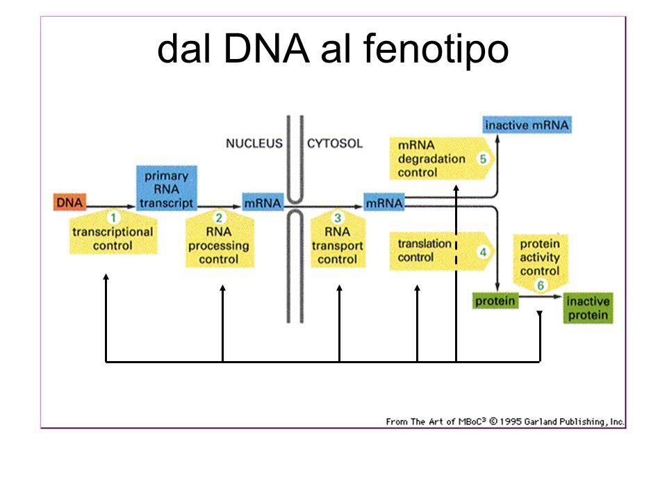 dal DNA al fenotipo