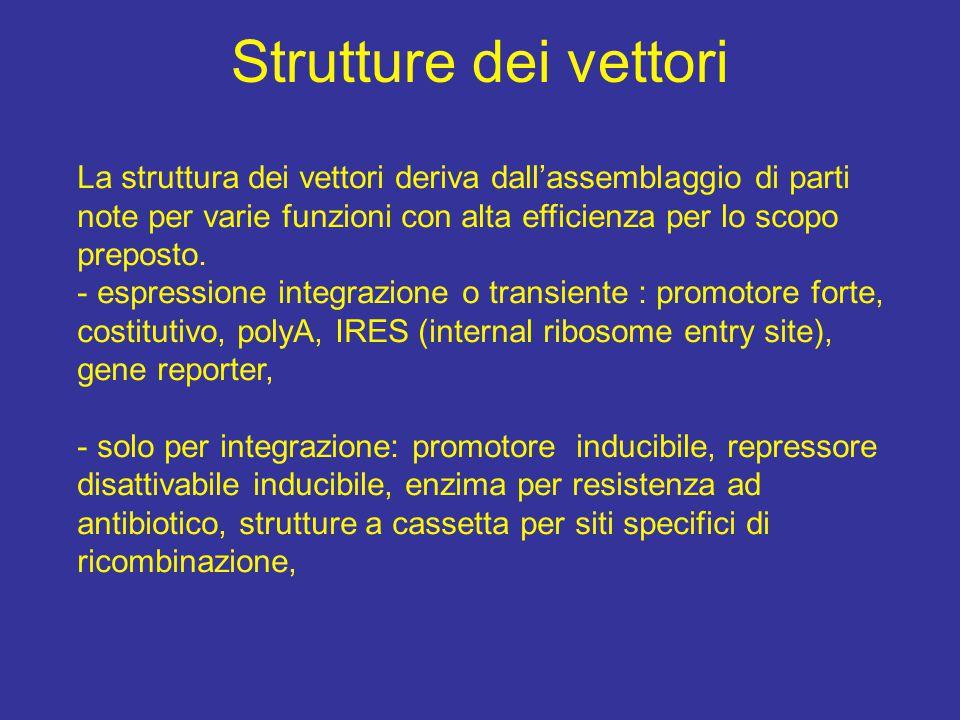 Strutture dei vettori La struttura dei vettori deriva dall'assemblaggio di parti note per varie funzioni con alta efficienza per lo scopo preposto.