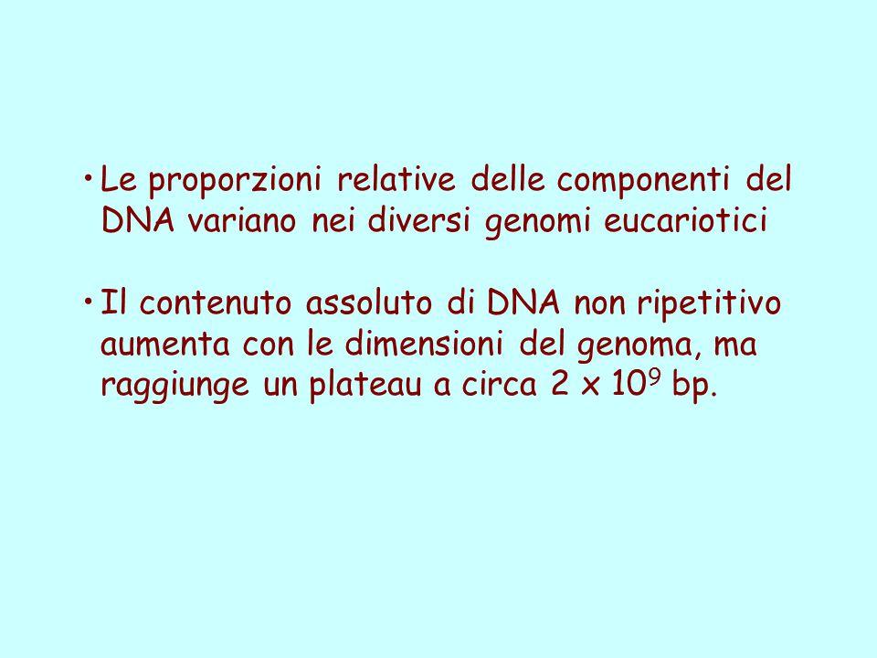 Le proporzioni relative delle componenti del DNA variano nei diversi genomi eucariotici Il contenuto assoluto di DNA non ripetitivo aumenta con le dim