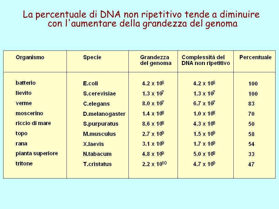 La percentuale di DNA non ripetitivo tende a diminuire con l'aumentare della grandezza del genoma