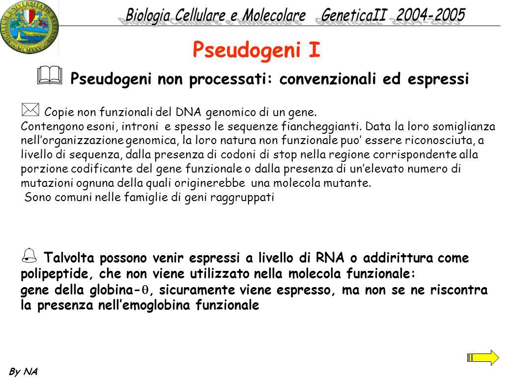 By NA * Copie non funzionali del DNA genomico di un gene. Contengono esoni, introni e spesso le sequenze fiancheggianti. Data la loro somiglianza nell