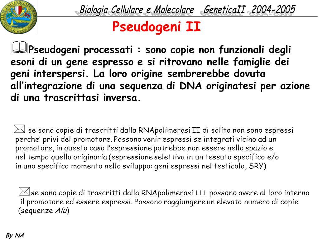 By NA  Pseudogeni processati : sono copie non funzionali degli esoni di un gene espresso e si ritrovano nelle famiglie dei geni interspersi. La loro