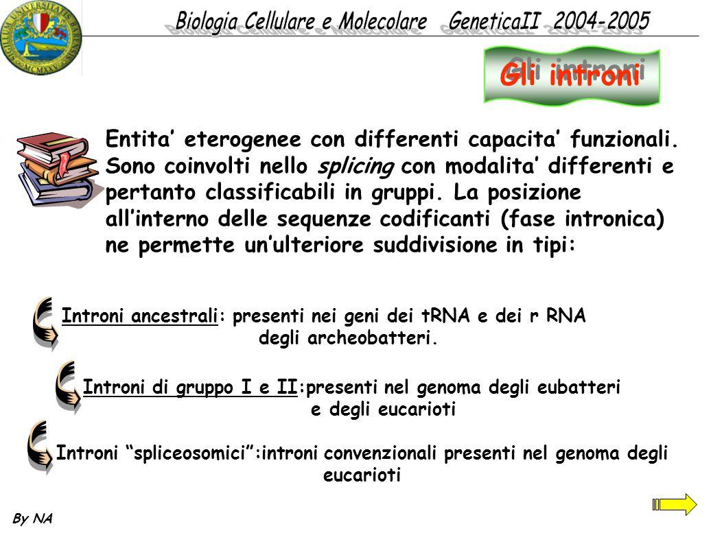 By NA Gli introni Entita' eterogenee con differenti capacita' funzionali. Sono coinvolti nello splicing con modalita' differenti e pertanto classifica