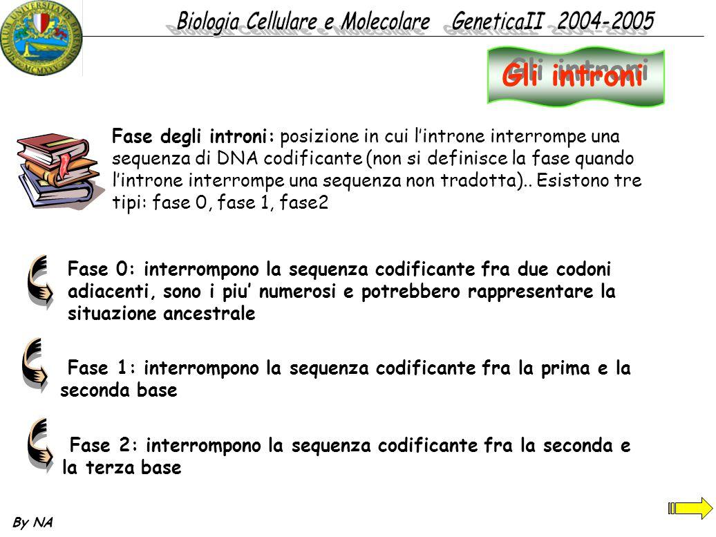 By NA Fase degli introni: posizione in cui l'introne interrompe una sequenza di DNA codificante (non si definisce la fase quando l'introne interrompe