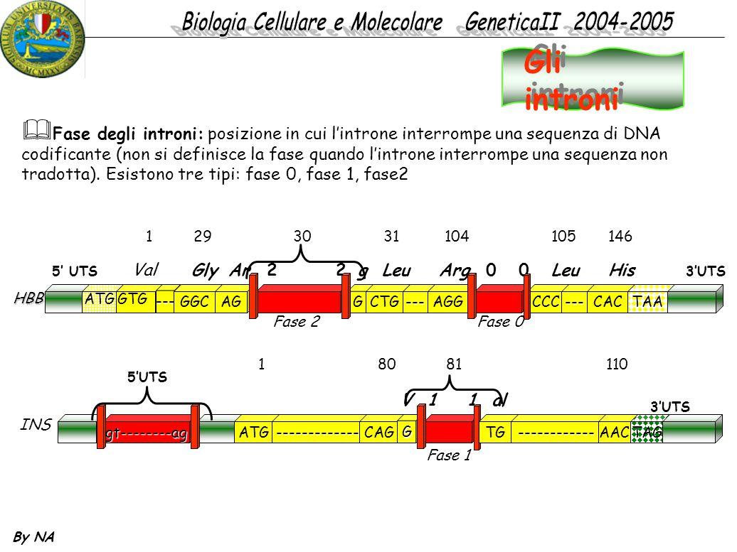 By NA  Fase degli introni: posizione in cui l'introne interrompe una sequenza di DNA codificante (non si definisce la fase quando l'introne interromp