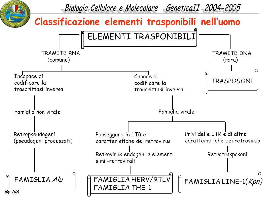 By NA ELEMENTI TRASPONIBILI TRAMITE RNA (comune) TRAMITE DNA (rara) Incapace di codificare la trascrittasi inversa Famiglia non virale Retropseudogeni