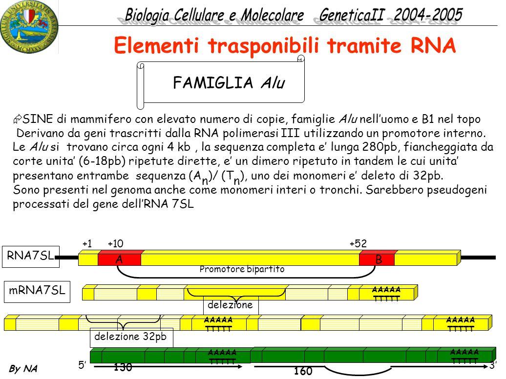 By NA  SINE di mammifero con elevato numero di copie, famiglie Alu nell'uomo e B1 nel topo Derivano da geni trascritti dalla RNA polimerasi III utili