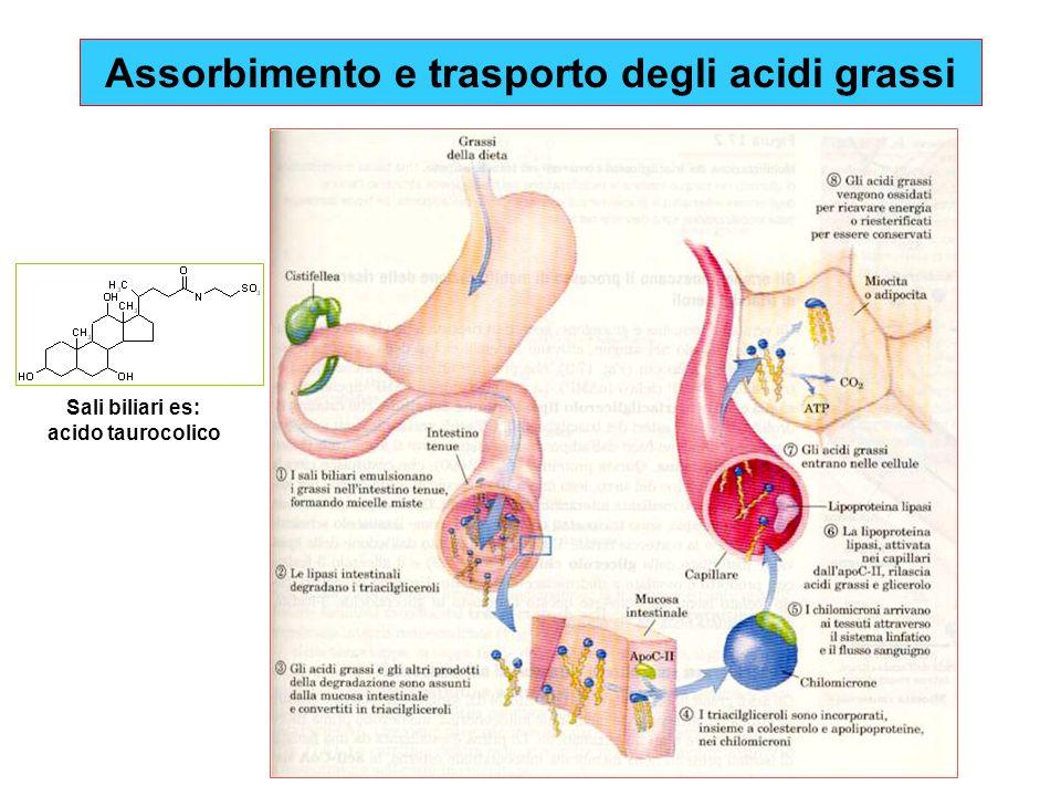 Triacilgliceroli Le lipasi intestinali degradano i triacilgliceroli Acidi grassi liberi glicerolo Lipasi H2OH2O Acido Cis-  9 -ottadecenoico Acido oleico Acido n-ottadecenoico Acido stearico