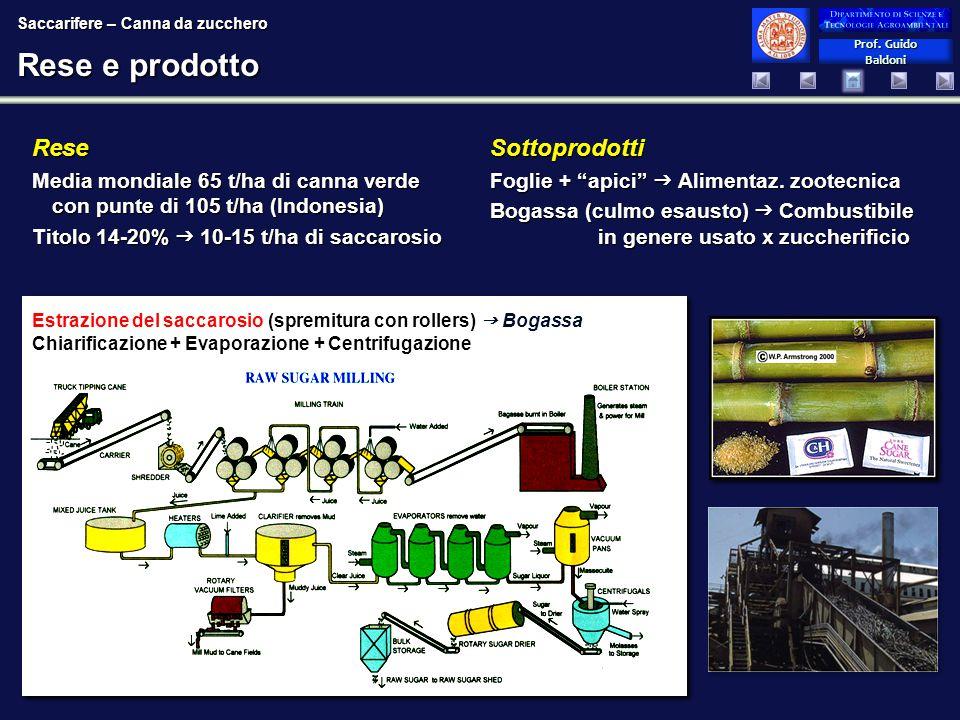 Prof. Guido Baldoni Prof. Guido Baldoni Rese e prodotto Rese Media mondiale 65 t/ha di canna verde con punte di 105 t/ha (Indonesia) Titolo 14-20%  1