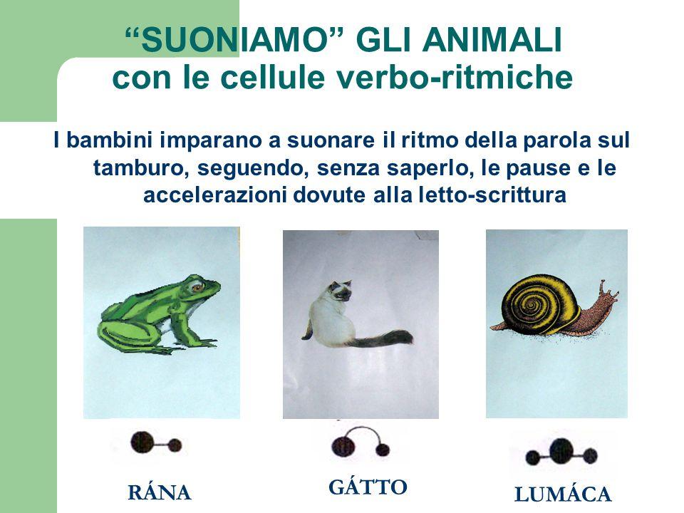 """RÁNA GÁTTO LUMÁCA """"SUONIAMO"""" GLI ANIMALI con le cellule verbo-ritmiche I bambini imparano a suonare il ritmo della parola sul tamburo, seguendo, senza"""
