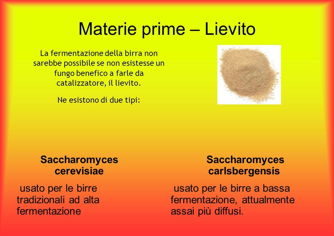 Materie prime – Lievito La fermentazione della birra non sarebbe possibile se non esistesse un fungo benefico a farle da catalizzatore, il lievito. Ne