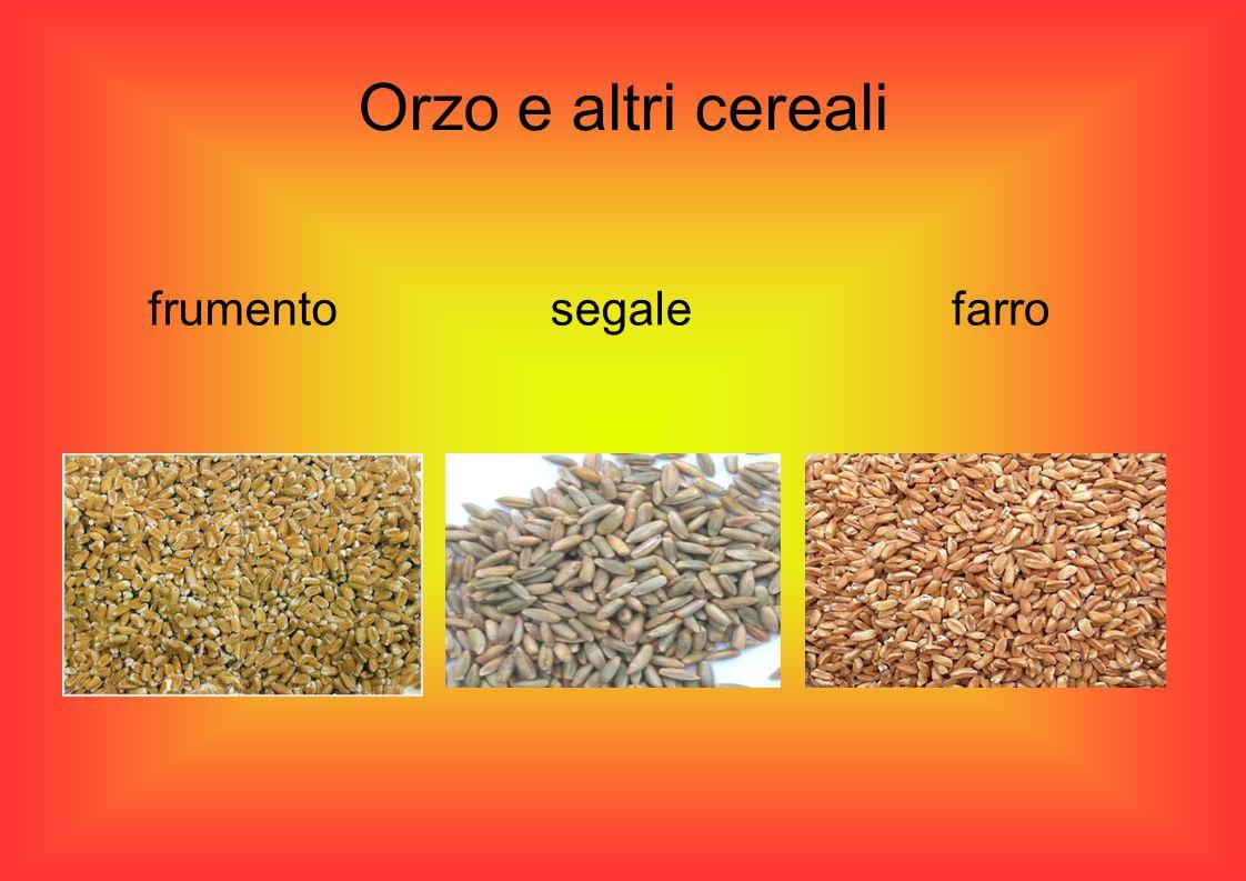 Orzo e altri cereali frumentosegalefarro