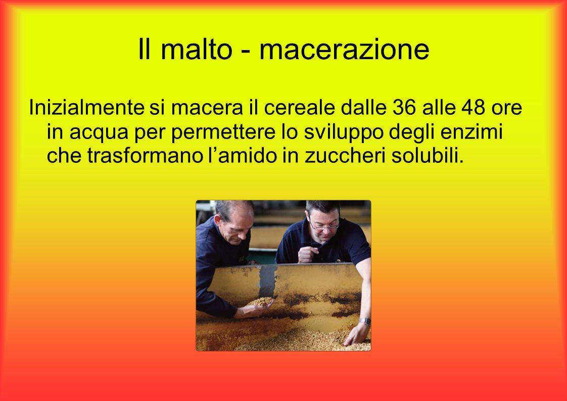 Il malto - macerazione Inizialmente si macera il cereale dalle 36 alle 48 ore in acqua per permettere lo sviluppo degli enzimi che trasformano l'amido in zuccheri solubili.