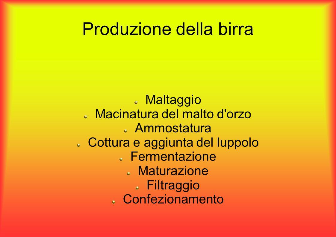 Produzione della birra Maltaggio Macinatura del malto d orzo Ammostatura Cottura e aggiunta del luppolo Fermentazione Maturazione Filtraggio Confezionamento