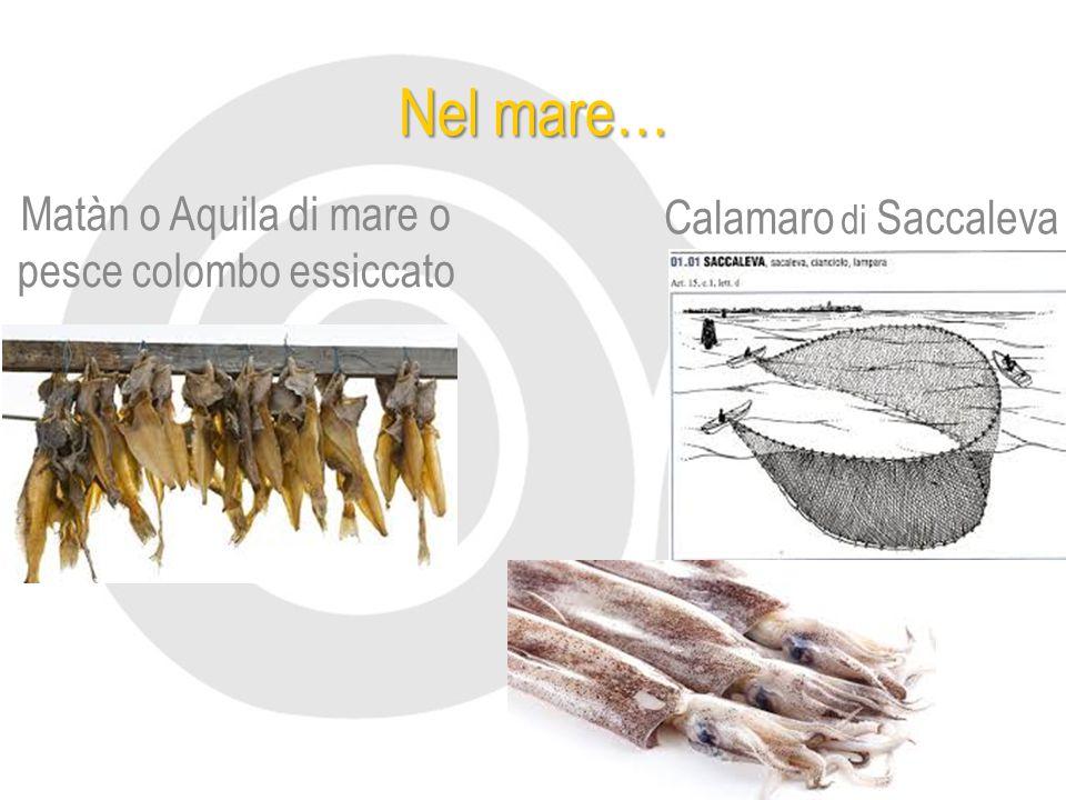 Nel mare… Matàn o Aquila di mare o pesce colombo essiccato Calamaro di Saccaleva