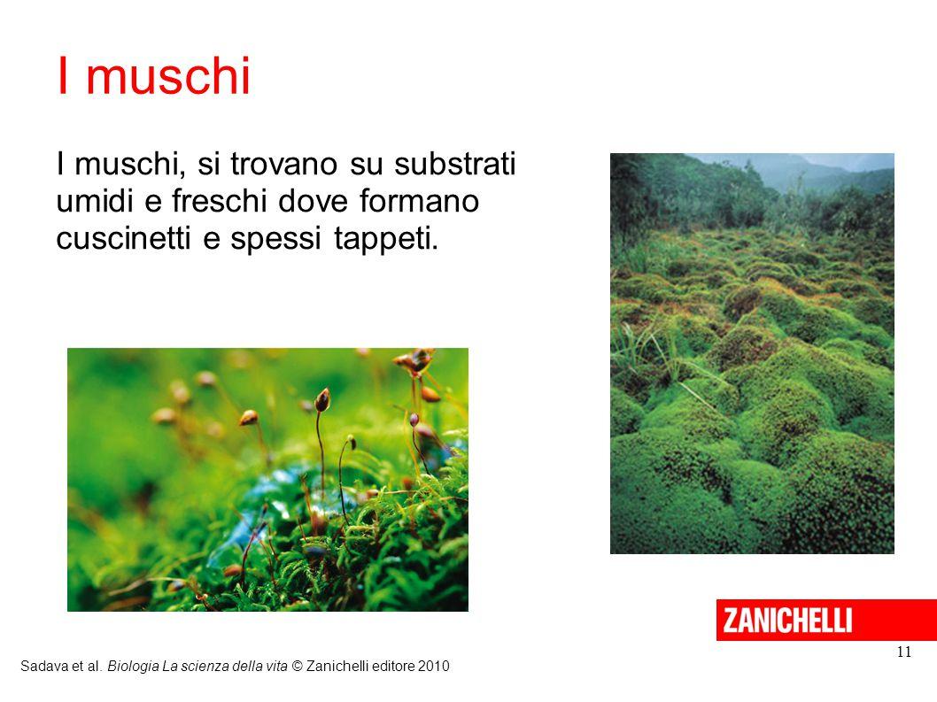 I muschi Sadava et al. Biologia La scienza della vita © Zanichelli editore 2010 11 I muschi, si trovano su substrati umidi e freschi dove formano cusc