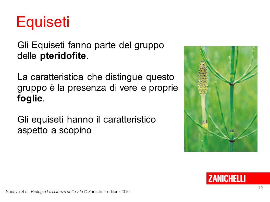 Equiseti Sadava et al. Biologia La scienza della vita © Zanichelli editore 2010 15 Gli Equiseti fanno parte del gruppo delle pteridofite. La caratteri