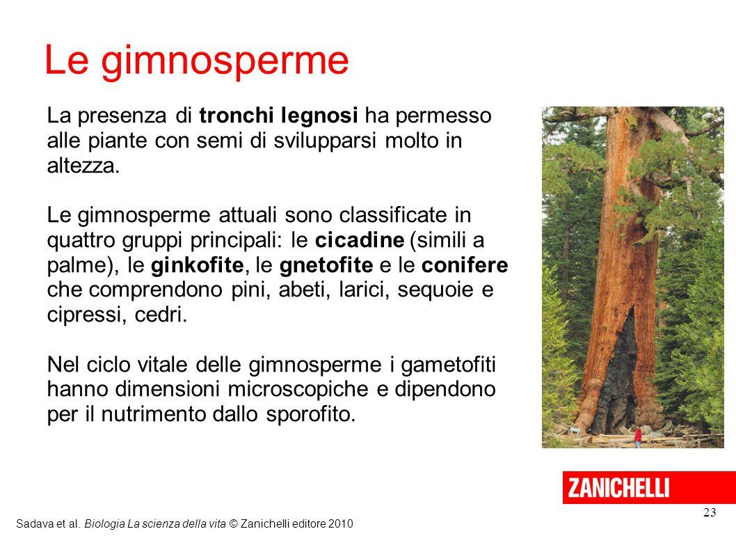 Le gimnosperme Sadava et al. Biologia La scienza della vita © Zanichelli editore 2010 23 La presenza di tronchi legnosi ha permesso alle piante con se
