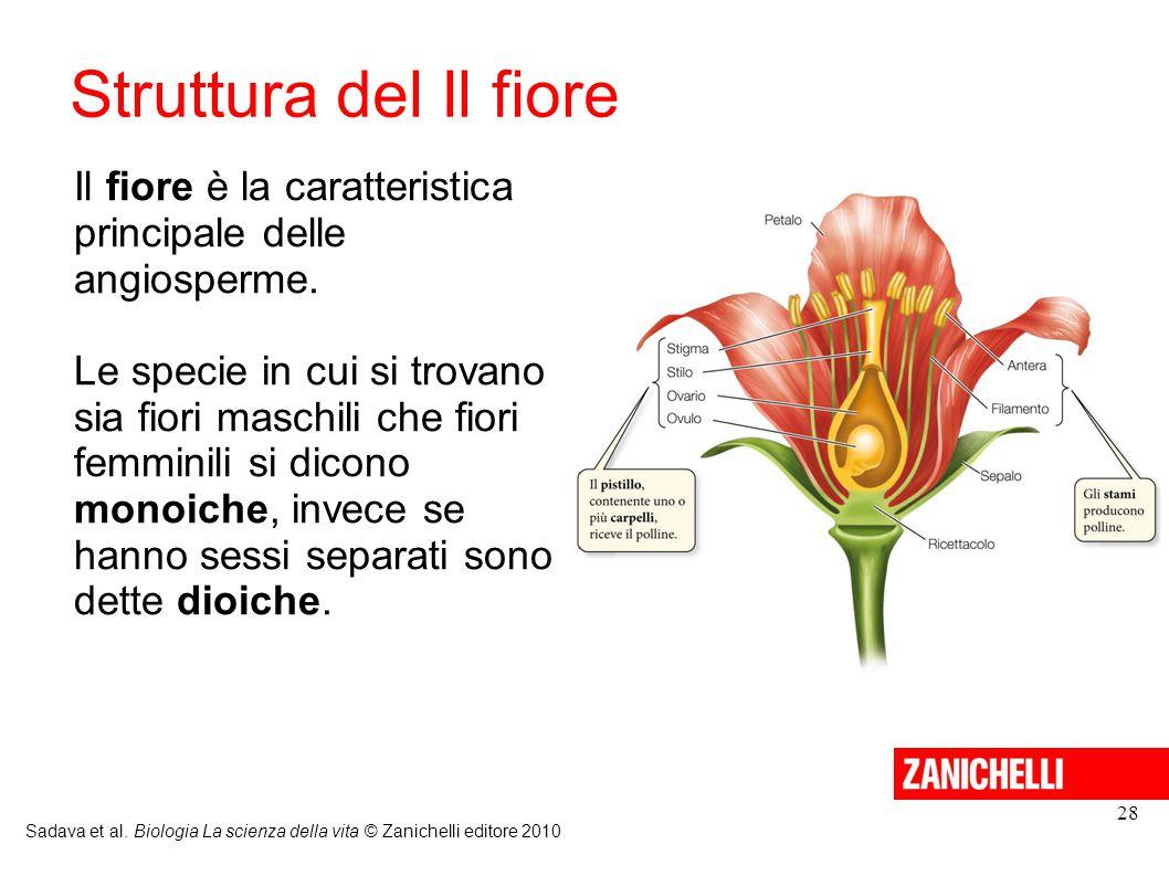 Struttura del Il fiore Sadava et al. Biologia La scienza della vita © Zanichelli editore 2010 28 Il fiore è la caratteristica principale delle angiosp