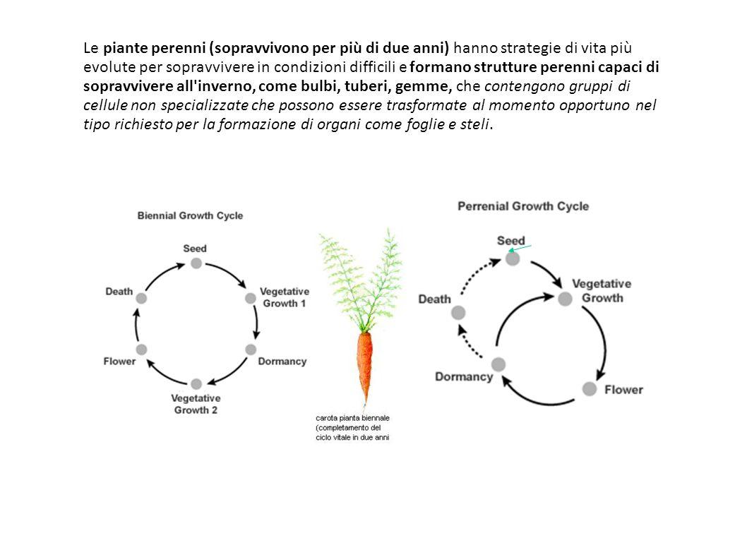 Le piante perenni (sopravvivono per più di due anni) hanno strategie di vita più evolute per sopravvivere in condizioni difficili e formano strutture