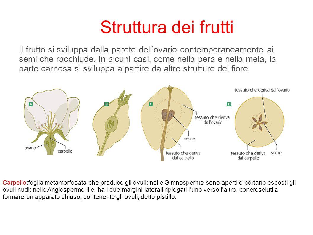 Il frutto si sviluppa dalla parete dell'ovario contemporaneamente ai semi che racchiude. In alcuni casi, come nella pera e nella mela, la parte carnos
