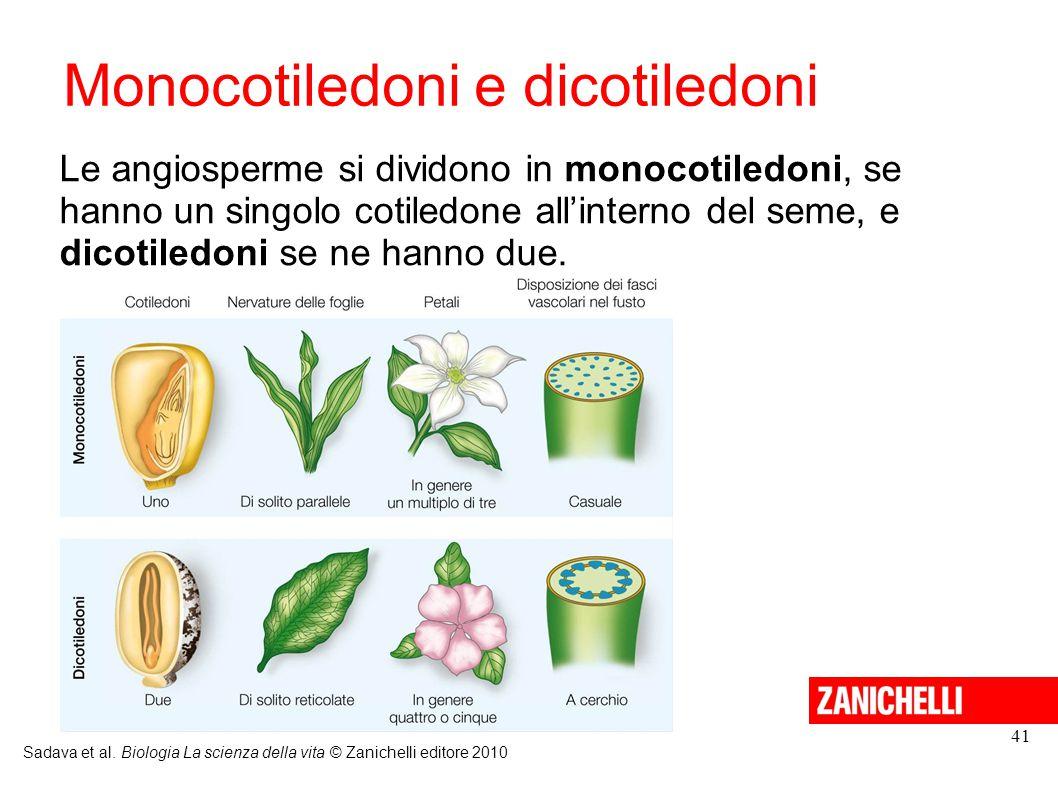 Monocotiledoni e dicotiledoni Sadava et al. Biologia La scienza della vita © Zanichelli editore 2010 41 Le angiosperme si dividono in monocotiledoni,